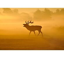 Call of the Wild Photographic Print