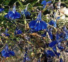 Wild flowers by poppyflower