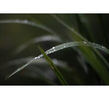 Dropplets on blade of grass Photographic Print
