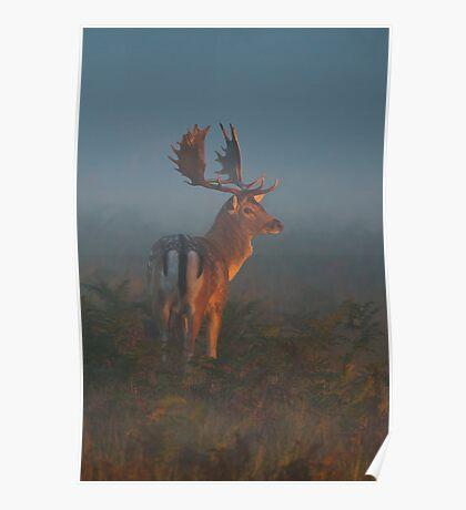 Fallow Buck Poster