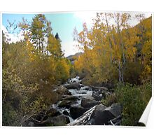 Fall at the Creek Poster