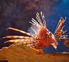 Lionfish by Savannah Gibbs