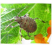 Protection Bug Poster