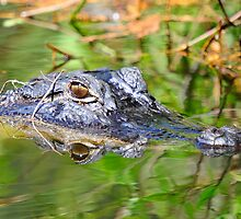 GATOR HEAD IN THE SWAMP by Photography by TJ Baccari