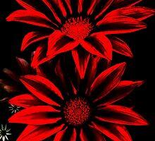 Red&Black Flowers by poppyflower