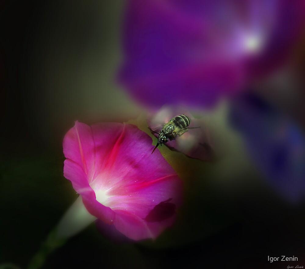 Nectar Harvest by Igor Zenin