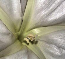 Moon Flower Center by BarbWireNRoses