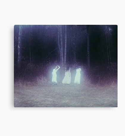 Sisters Of Birch Canvas Print