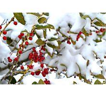 Snow Berries Photographic Print