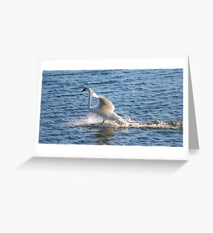 I have my own built in water skis. HA! Greeting Card