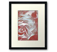Half Rose Framed Print
