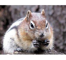 Golden-mantled ground squirrel Photographic Print