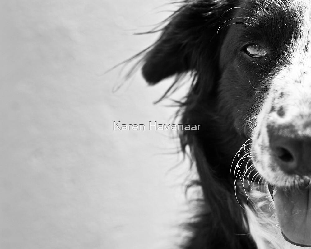 Half the dog by Karen Havenaar