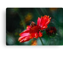 Attraction in Pink Canvas Print