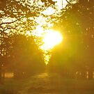 Trees in sunset by jonwhitehead