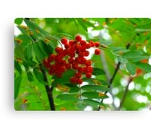 Mountain Ash, (Rowen Berry) Canvas Print