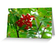 Mountain Ash, (Rowen Berry) Greeting Card