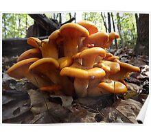 Jack 'O Lantern Mushroom Poster