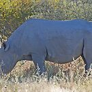 Black Rhino, Khama Rhino Sanctuary, Botswana, Africa by Adrian Paul