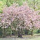 Blossom by Adaaaaaaaaaaaam