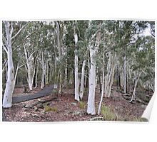 To White Gum Lookout Poster