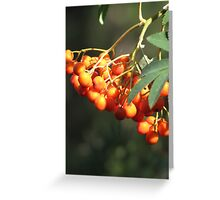 Mountain Ash Greeting Card