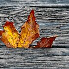 "Lone Maple Leaf - ""Help I'm Stuck!"" by Daphne Eze"