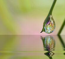 Dew Drop Edit by relayer51