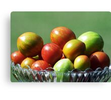 Tomato varieties in my garden Canvas Print