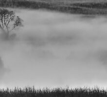 The Tree in the Mist by Mully410