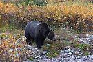 Mother bear by zumi