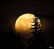 Supermoon by beauramsey