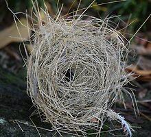 birds nest on the ground by Angel35