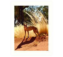 Huntress, East of Docker River, Northern Territory Art Print