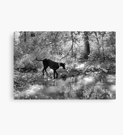 BW Gemma Reflections Canvas Print