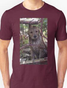 Lady Peek a Boo T-Shirt