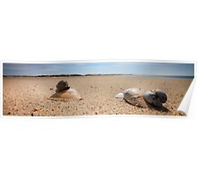 Hard Shelled Clam - Provincetown Beach Poster