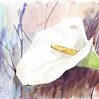 ARUM LILY (Zantedeschia aethiopica) by Maree  Clarkson