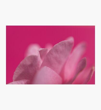 Femininity Photographic Print