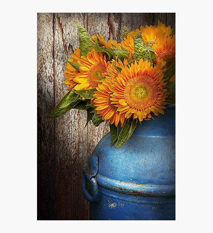 Flower - Sunflower - Country Sunshine Photographic Print