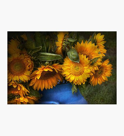 Flower - Sunflower - The suns have risen  Photographic Print