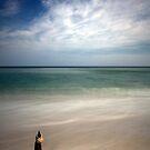 Longnook Beach Shell by Artist Dapixara