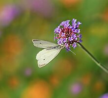 Cabbage White Butterfly, a Purple Top and Mother Nature by KatMagic Photography