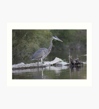 Blue Heron on the Milwaukee River Art Print
