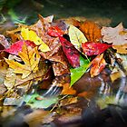 Fall Leaves in a Stream by Kenneth Keifer