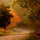 WHere Will This Road Take US ? by Graeme M