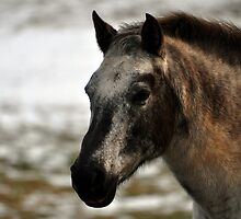 Pony by Michelle  Edwards Insights Photography