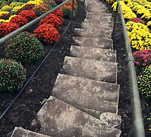 Down the steps of mums by JLPPhotos