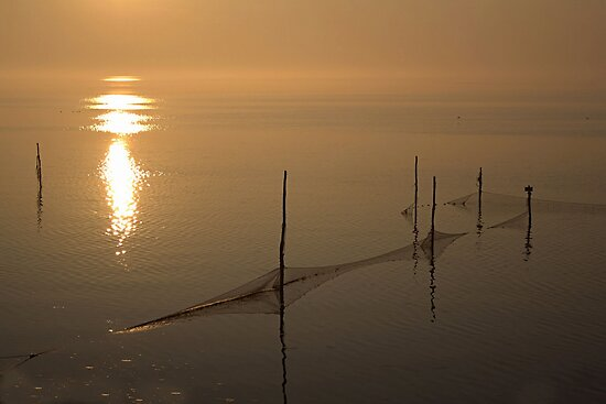 Morning Light by Jo Nijenhuis