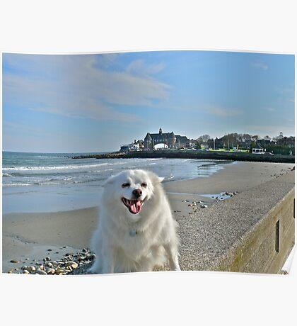 Last Great Beach Day - Sylvie At Narragansett Beach Poster